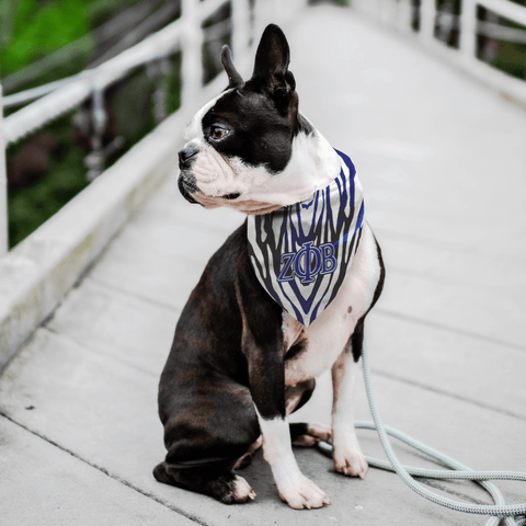 Image of Zeta Phi Beta Pet Bandana