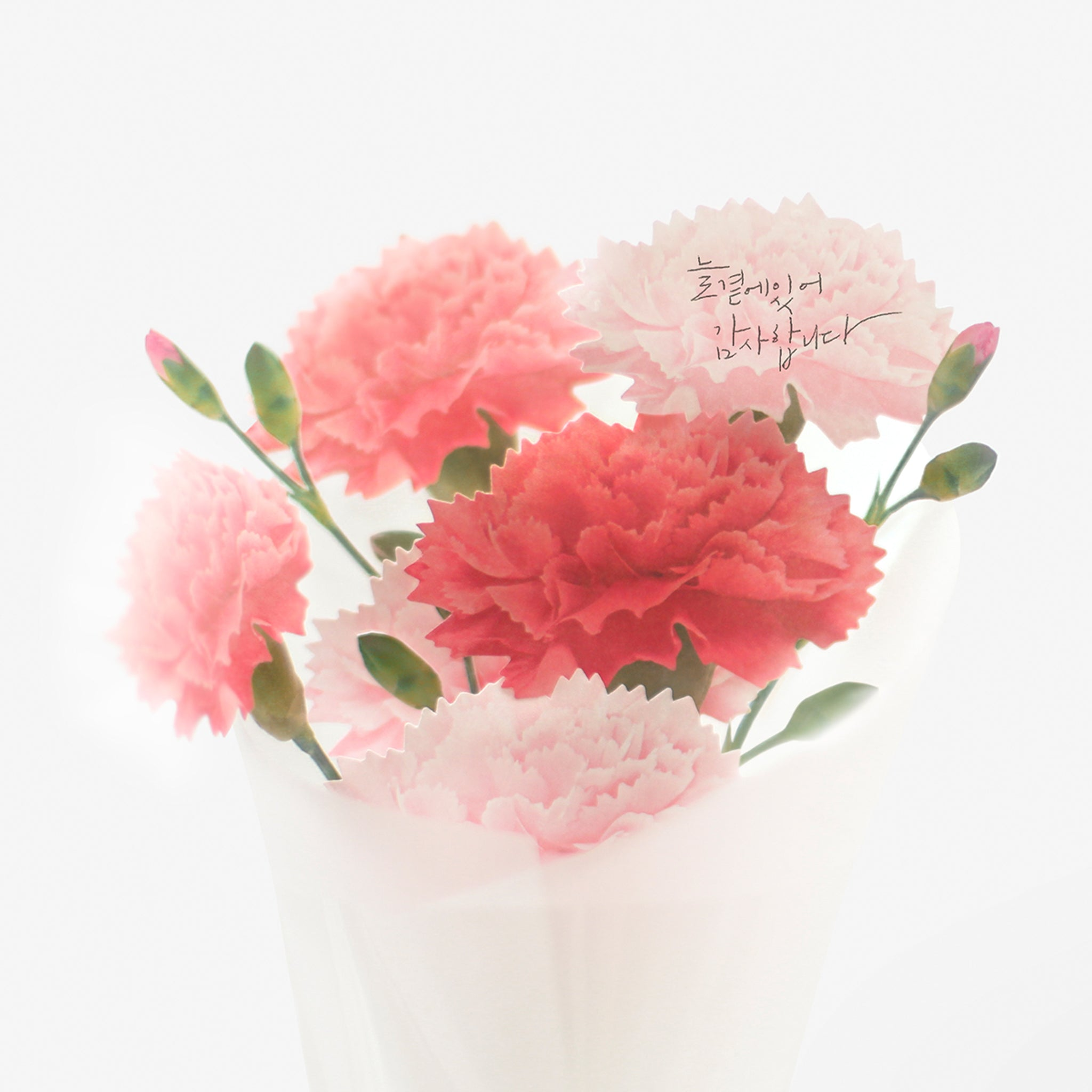 Appree Sticky Leaf Carnation Pink S