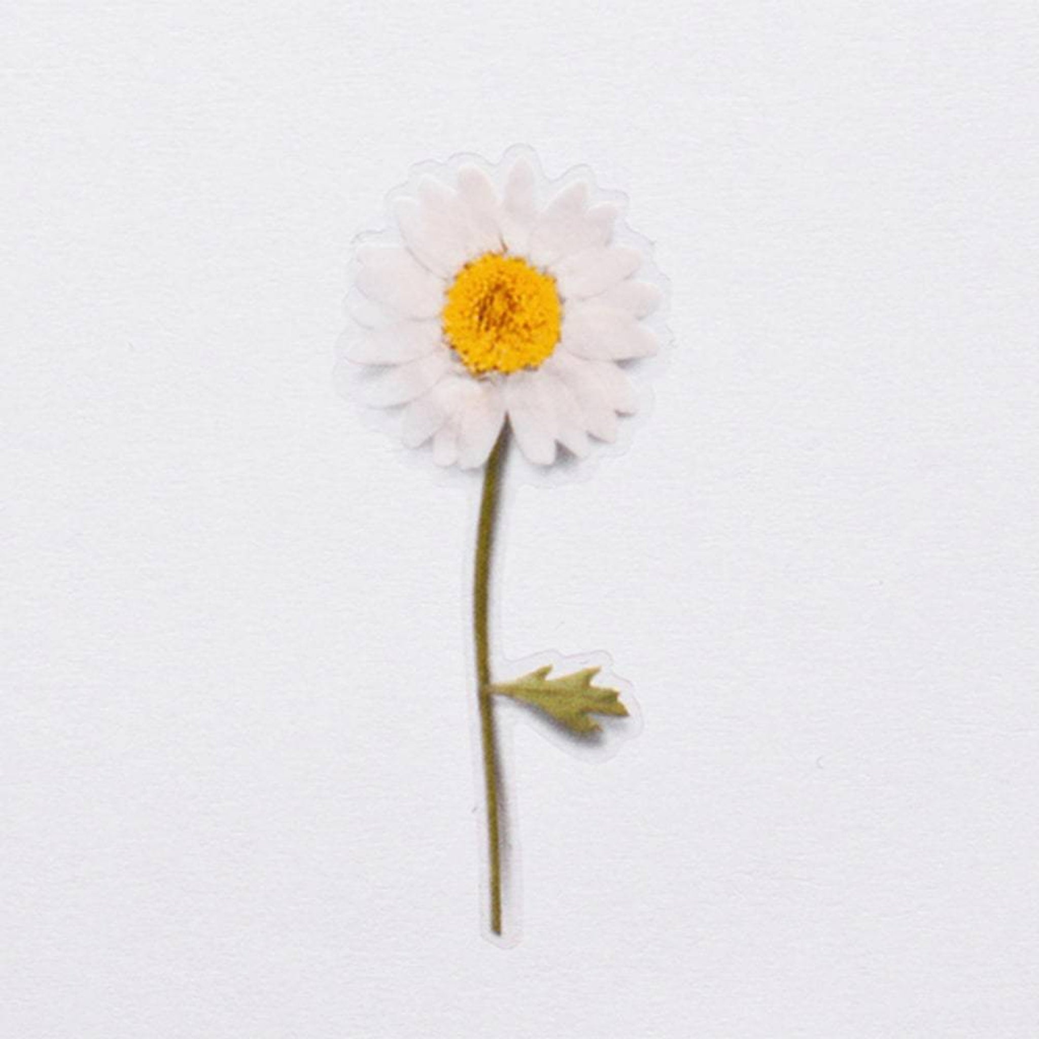 Appree Pressed Flower Sticker Marguerite