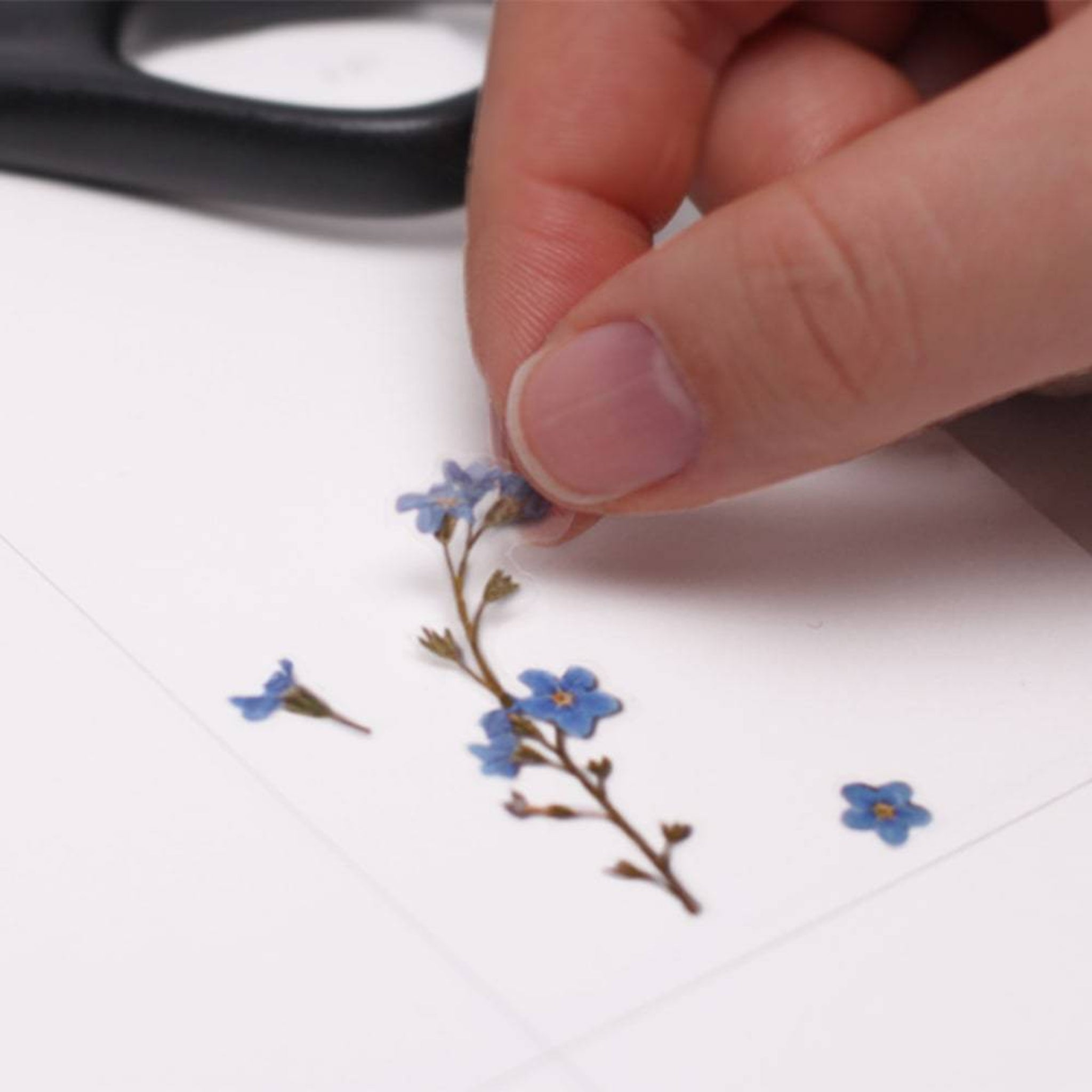 Appree Pressed Flower Sticker Forget me not
