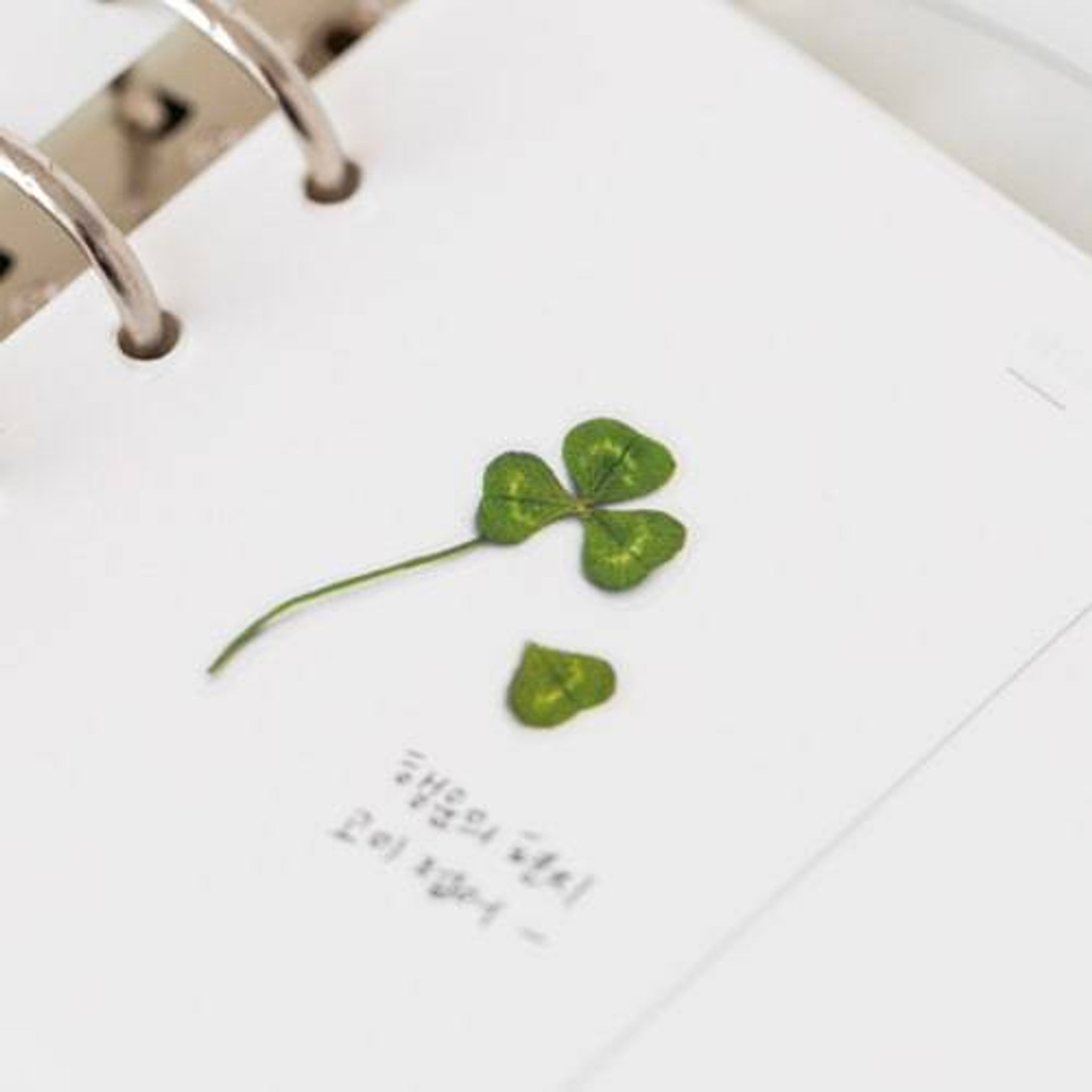 Appree Pressed Flower Sticker Four Leaf Clover