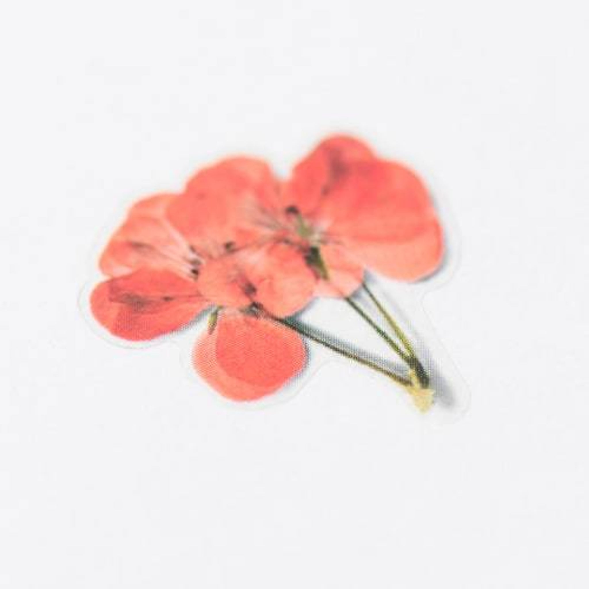 Appree Pressed Flower Sticker Geranium