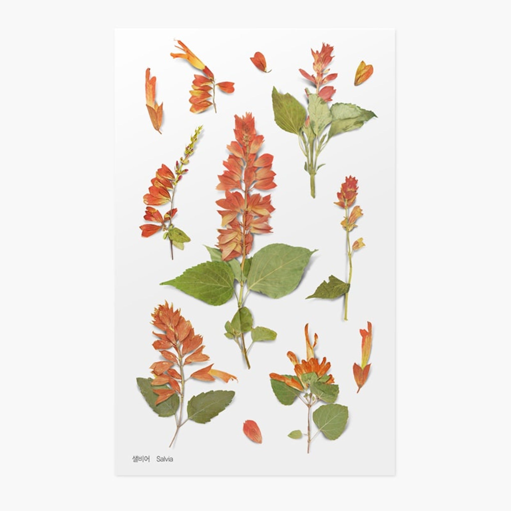 Appree Pressed Flower Sticker Salvia