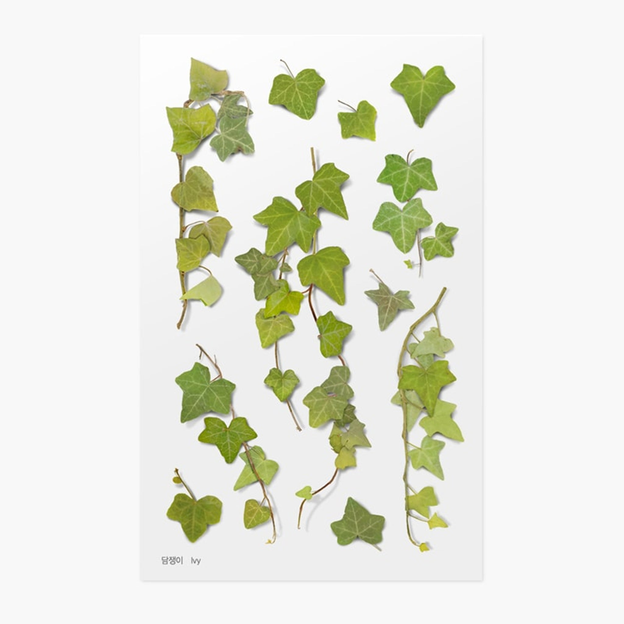 Appree Pressed Flower Sticker Ivy