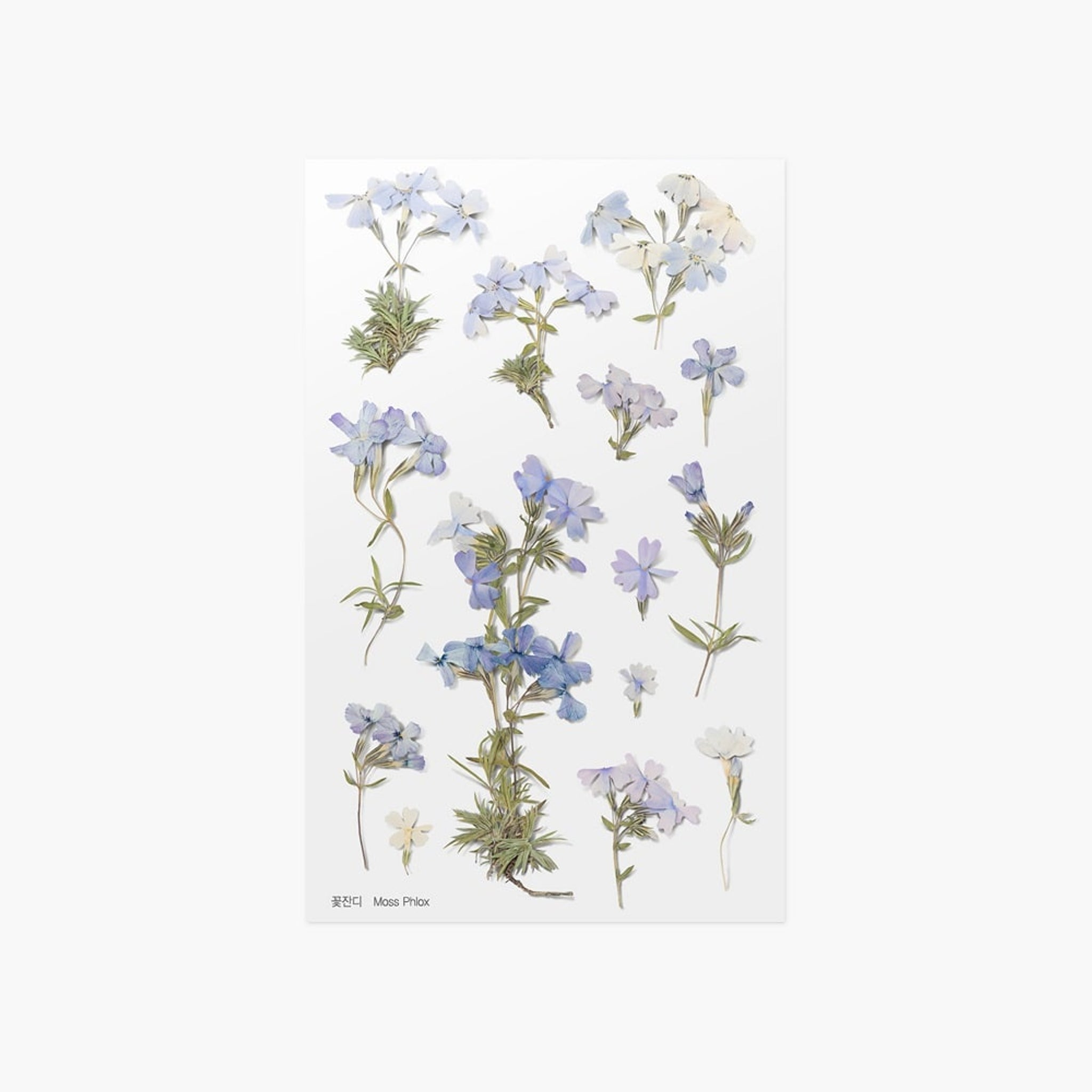 Appree Pressed Flower Sticker Moss Phlox