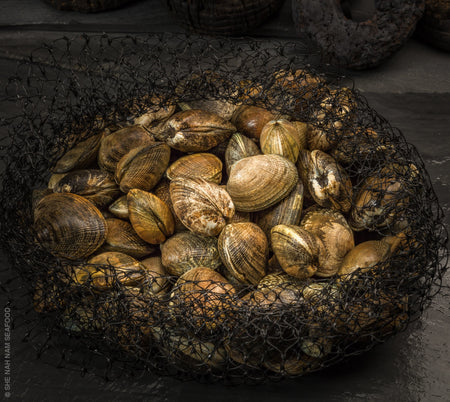 Fresh Manila Clams Shellfish Seafood