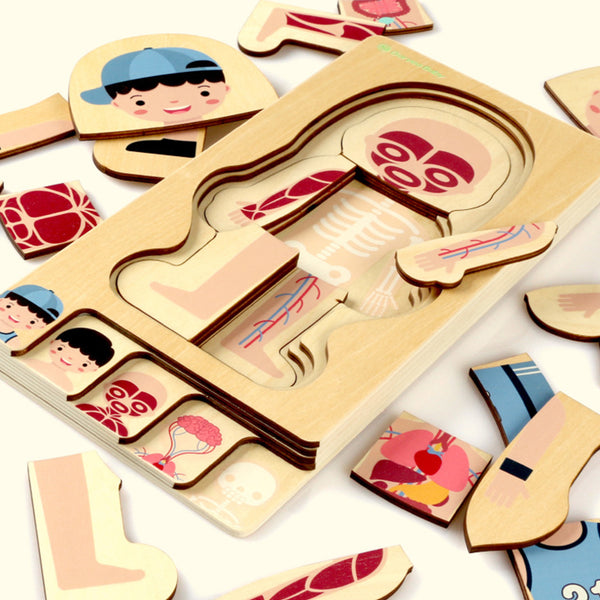 Human Body Layers Puzzle