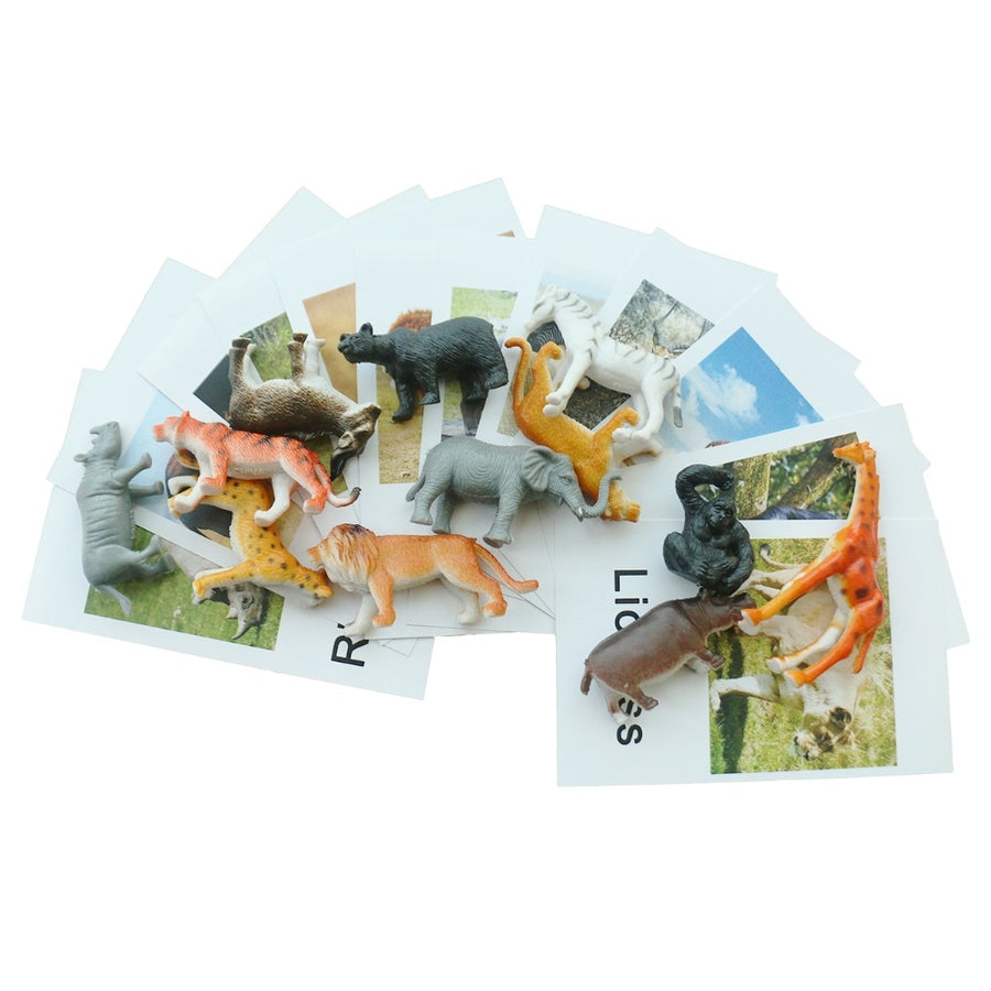 Matching  Animal Nomenclature Cards and Animals