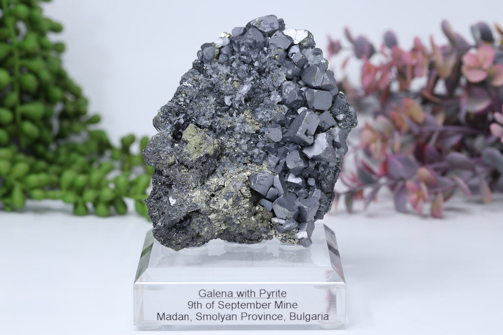 Galena with Pyrite Mounted Specimen from 9th of September Mine DD1808