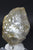 "3"" Limonite Coated Himalayan Quartz Point DD2156"