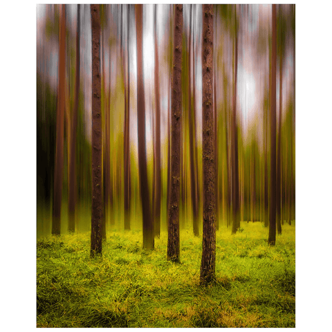 Image of Print - Ethereal Mood in Portumna Forest Park, County Galway - James A. Truett - Moods of Ireland - Irish Art