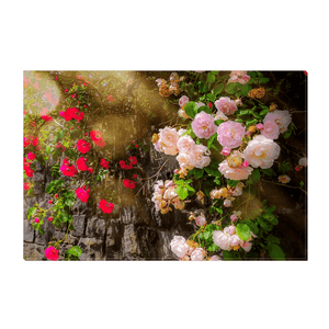 Canvas Wrap - Irish Roses Canvas Wrap Moods of Ireland 12x18 inch