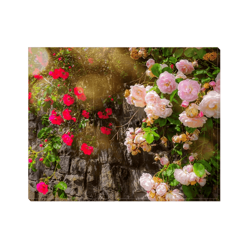 Canvas Wrap - Irish Roses Canvas Wrap Moods of Ireland 8x10 inch