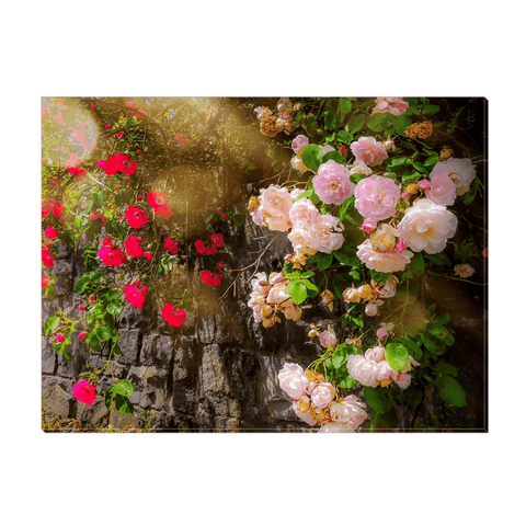 Canvas Wrap - Irish Roses Canvas Wrap Moods of Ireland