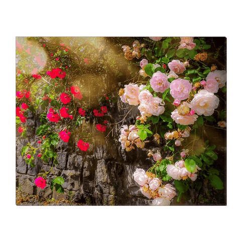Image of Canvas Wrap - Irish Roses, County Clare - James A. Truett - Moods of Ireland - Irish Art