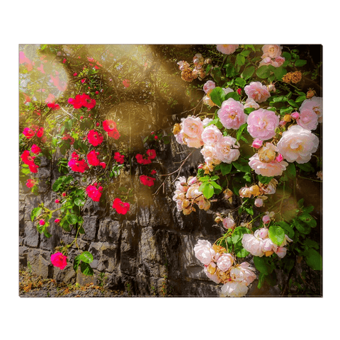 Canvas Wrap - Irish Roses Canvas Wrap Moods of Ireland 20x24 inch
