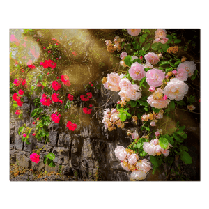 Canvas Wrap - Irish Roses, County Clare - James A. Truett - Moods of Ireland - Irish Art