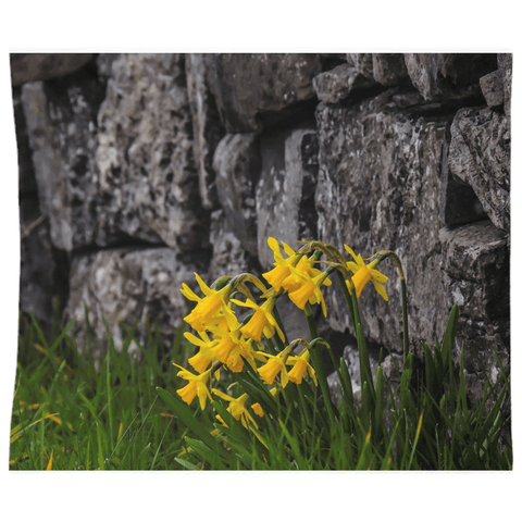 Image of Tapestry - Irish Spring Daffodils