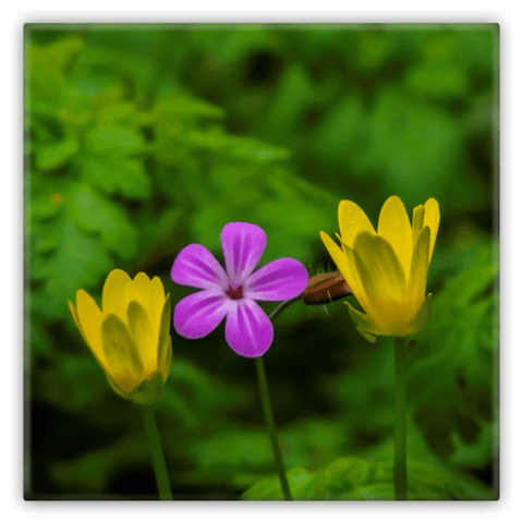 Image of Metal Magnets - Irish Flowers Collection Metal Magnets Moods of Ireland