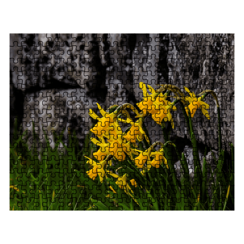 Puzzle - Irish Spring Daffodils along a Rock Wall in County Clare Puzzle Moods of Ireland 252 Pieces