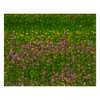 Puzzle - Wildflowers in an Irish Meadow Puzzle Moods of Ireland 252 Pieces