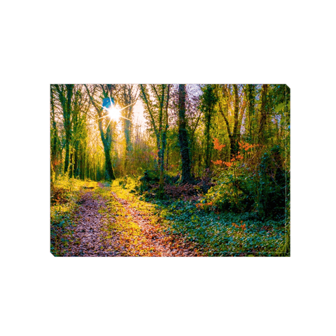Image of Canvas Wrap - Late Afternoon Sun at Dromore Wood Nature Reserve Canvas Wrap Moods of Ireland 5x7 inch
