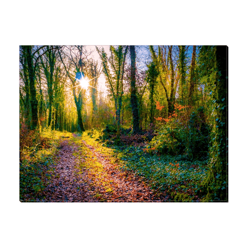 Image of Canvas Wrap - Late Afternoon Sun at Dromore Wood Nature Reserve Canvas Wrap Moods of Ireland 12x16 inch