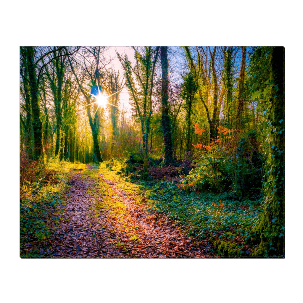 Canvas Wrap - Late Afternoon Sun at Dromore Wood Nature Reserve Canvas Wrap Moods of Ireland 16x20 inch