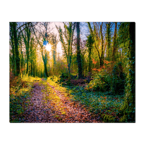 Image of Canvas Wrap - Late Afternoon Sun at Dromore Wood Nature Reserve Canvas Wrap Moods of Ireland 16x20 inch