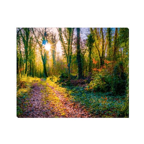 Image of Canvas Wrap - Late Afternoon Sun at Dromore Wood Nature Reserve Canvas Wrap Moods of Ireland 8x10 inch
