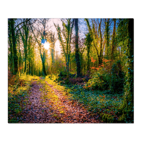 Image of Canvas Wrap - Late Afternoon Sun at Dromore Wood Nature Reserve Canvas Wrap Moods of Ireland 20x24 inch
