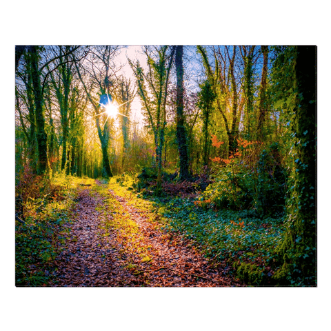 Image of Canvas Wrap - Late Afternoon Sun at Dromore Wood Nature Reserve Canvas Wrap Moods of Ireland 24x30 inch