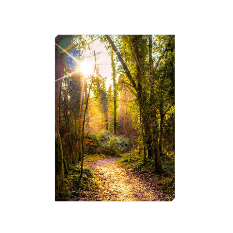 Image of Canvas Wrap - Sunlit Path in Dromore Wood Nature Reserve Canvas Wrap Moods of Ireland 5x7 inch