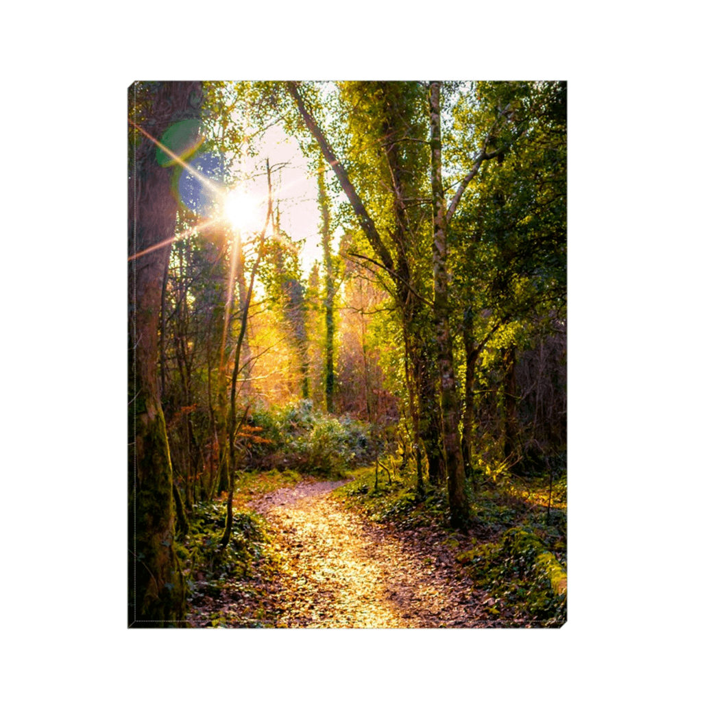 Canvas Wrap - Sunlit Path in Dromore Wood Nature Reserve Canvas Wrap Moods of Ireland 8x10 inch