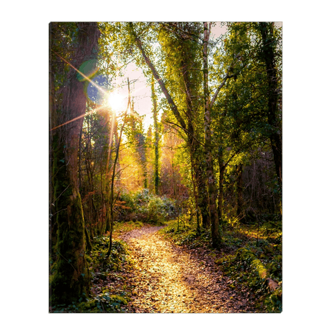 Image of Canvas Wrap - Sunlit Path in Dromore Wood Nature Reserve, County Clare - James A. Truett - Moods of Ireland - Irish Art