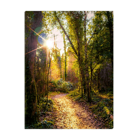 Image of Canvas Wrap - Sunlit Path in Dromore Wood Nature Reserve Canvas Wrap Moods of Ireland 12x16 inch