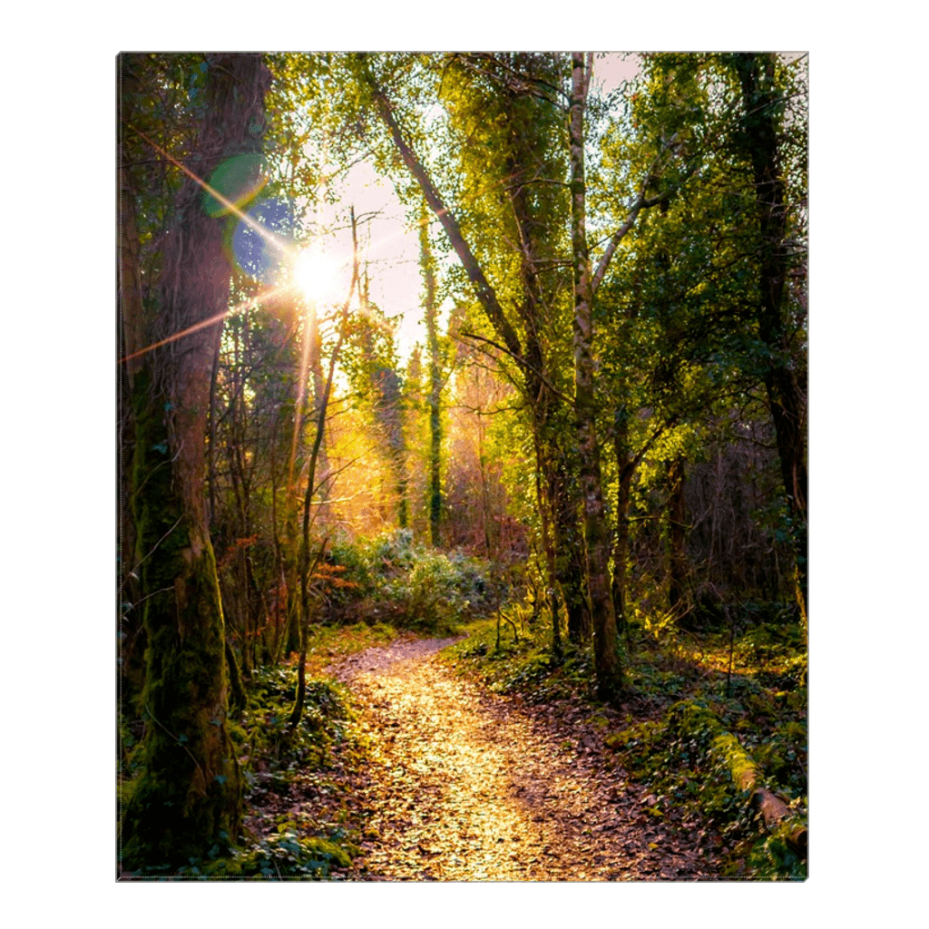 Canvas Wrap - Sunlit Path in Dromore Wood Nature Reserve Canvas Wrap Moods of Ireland 20x24 inch