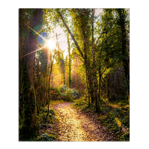 Image of Canvas Wrap - Sunlit Path in Dromore Wood Nature Reserve Canvas Wrap Moods of Ireland 20x24 inch