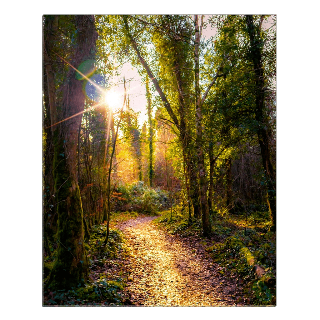 Canvas Wrap - Sunlit Path in Dromore Wood Nature Reserve Canvas Wrap Moods of Ireland 24x30 inch