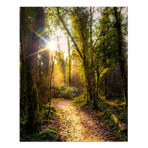 Image of Canvas Wrap - Sunlit Path in Dromore Wood Nature Reserve Canvas Wrap Moods of Ireland 24x30 inch