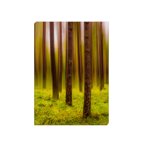 Image of Canvas Wrap - Ethereal Mood in Portumna Forest Park Canvas Wrap Moods of Ireland 5x7 inch