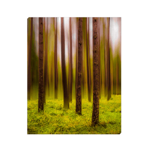 Canvas Wrap - Ethereal Mood in Portumna Forest Park Canvas Wrap Moods of Ireland 8x10 inch