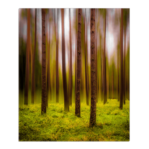 Image of Canvas Wrap - Ethereal Mood in Portumna Forest Park, County Galway - James A. Truett - Moods of Ireland - Irish Art