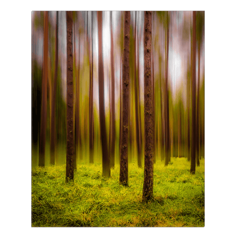 Image of Canvas Wrap - Ethereal Mood in Portumna Forest Park Canvas Wrap Moods of Ireland 24x30 inch