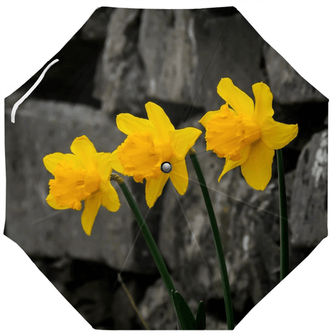 Umbrellas - Aunt DJ's Daffodils Umbrella Moods of Ireland Auto-Foldable Umbrella