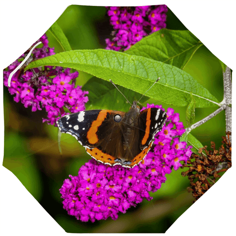 Image of Umbrellas - Butterfly at St. Martin's Well, Ballynacally Umbrella Moods of Ireland Auto-Foldable Umbrella