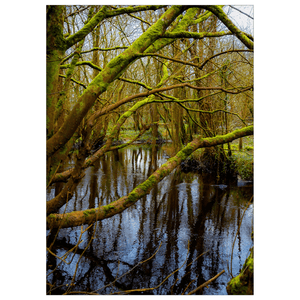 Flat Card - Faerie Forest Reflections at Thoor Ballylee, County Galway Flat Photo Card Moods of Ireland 1 Card