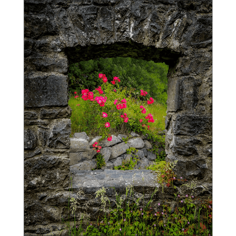 Image of Poster Print - Wild Irish Roses in County Galway, Ireland Poster Print Moods of Ireland 8x10 inch