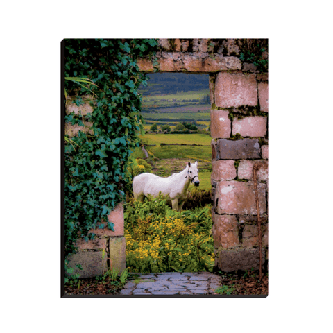 Image of Canvas Wrap - Horse in the Irish Countryside of County Clare - James A. Truett - Moods of Ireland - Irish Art