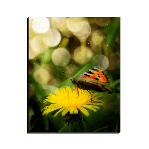 Canvas Wraps - May Butterfly and Dandelion in Ireland Canvas Wrap Moods of Ireland